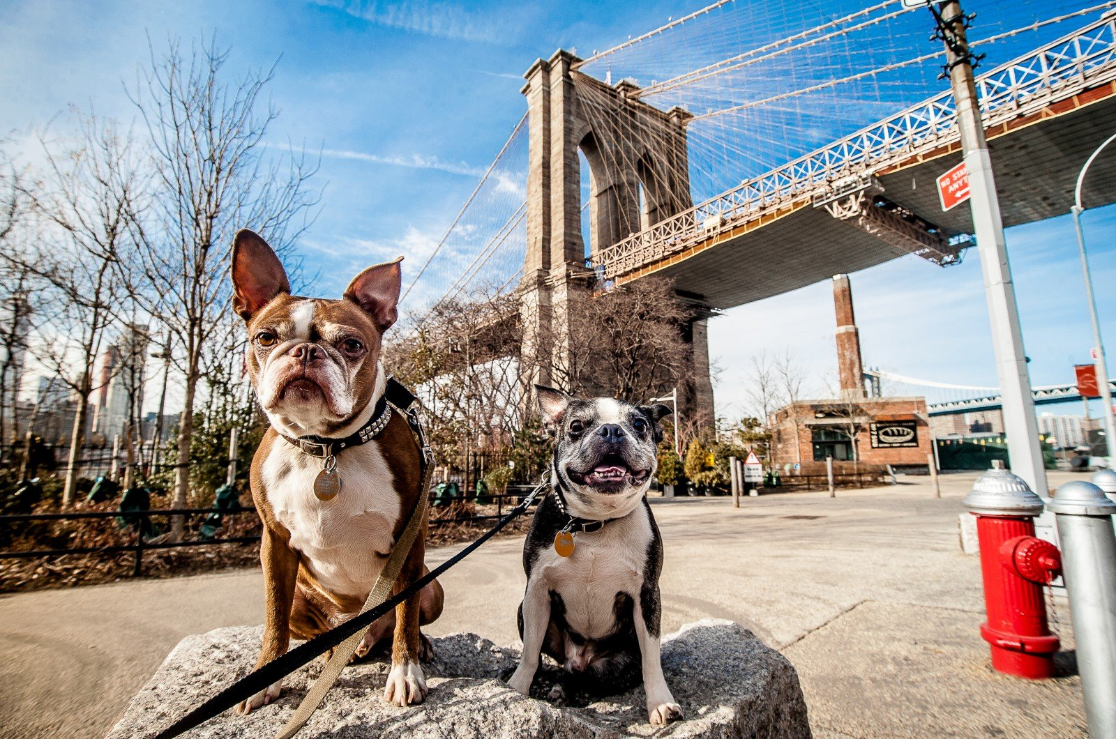 Travelling to New York With Your Pets