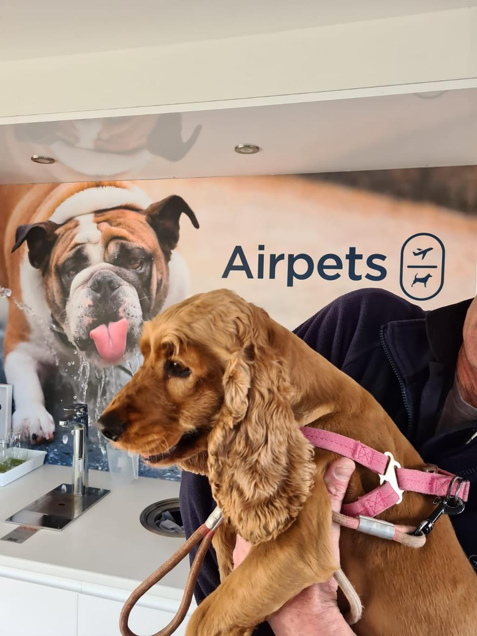 COVID-19: How Will It Affect Pet Travel?