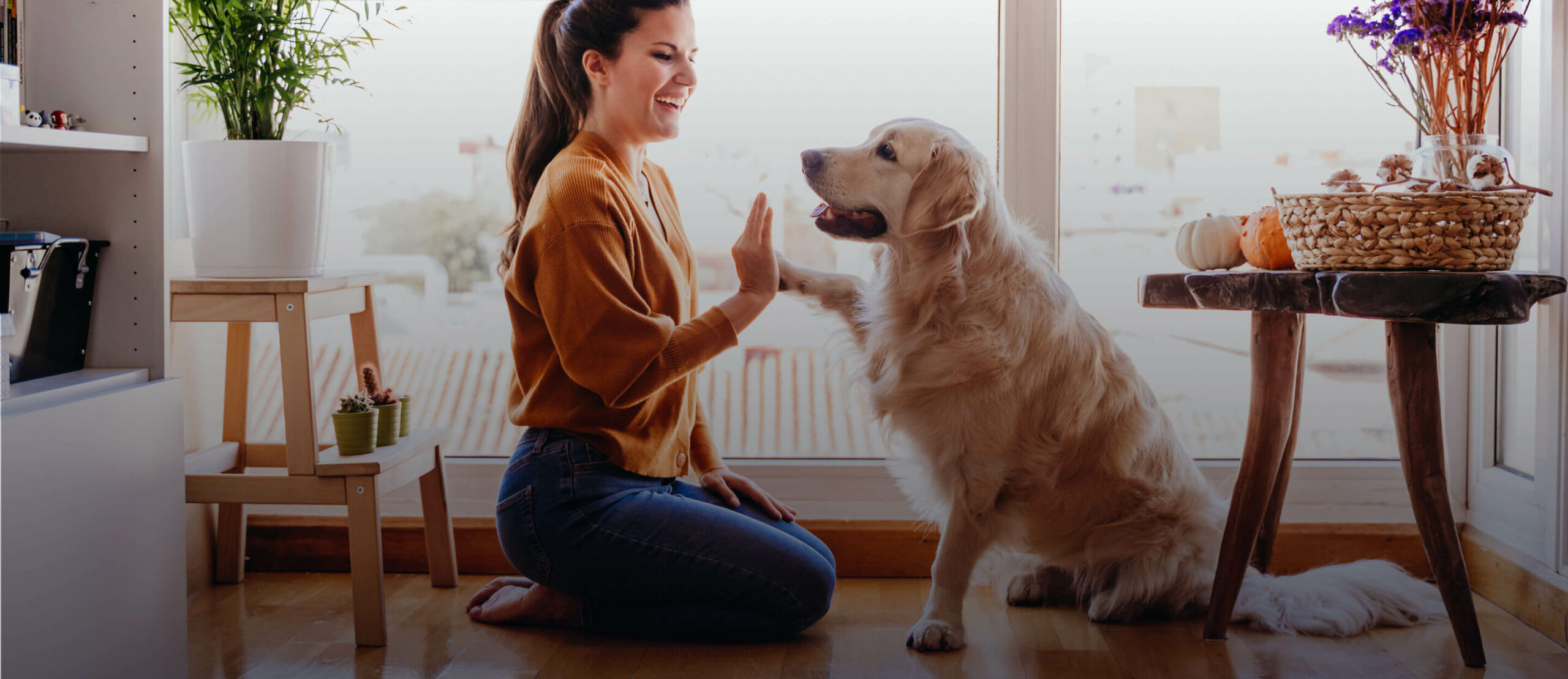 Pets Lets – Your Spot For Pet-Friendly Rentals